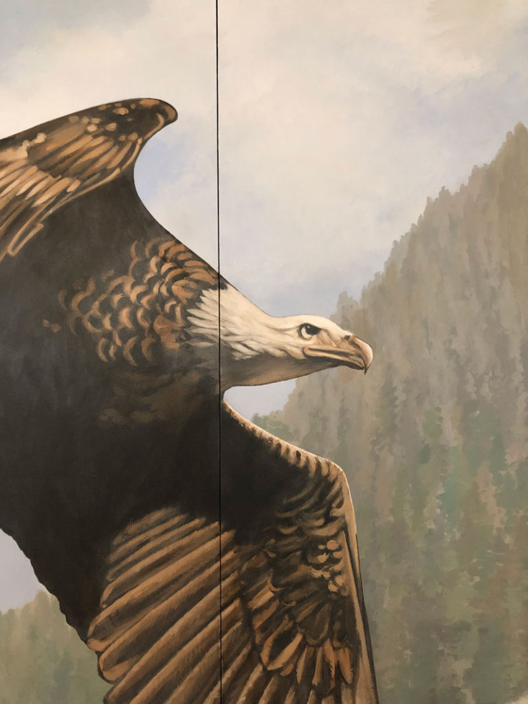 Close up of eagle